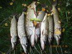 о рыбалках в 2015 году по открытой воде