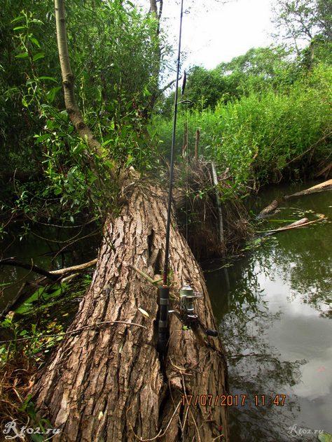 Спининнг Гад на дереве