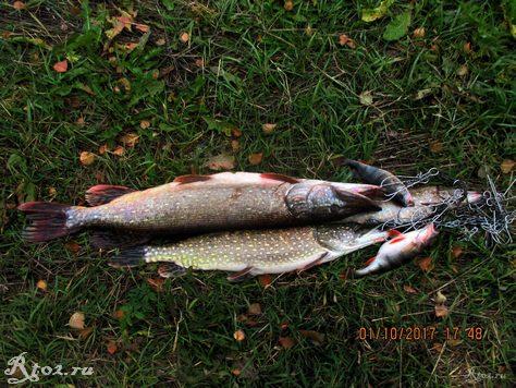 Рыба с десногорского водохранилища