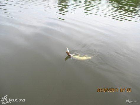 Щука на озере