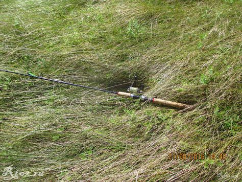 мягкая трава на берегу