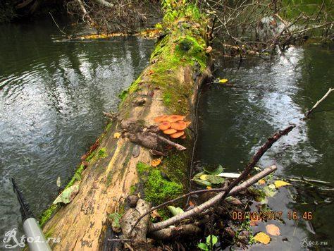 Грибы на дереве в воде