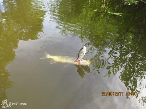 ловля свимбейтом на реке