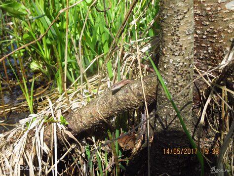 Ящерица на дереве 2