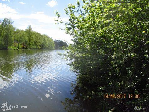 Черемуха на берегу озера