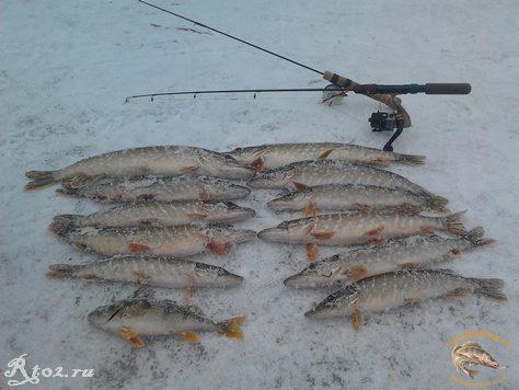 улов щуки зимой на реке