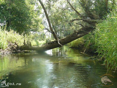 дерево через речку