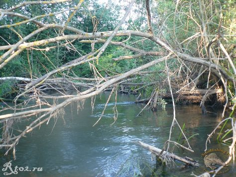 Завалы деревьев на речке
