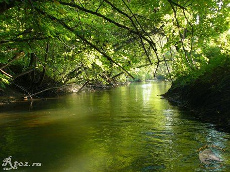 ветви деревье солнце и река