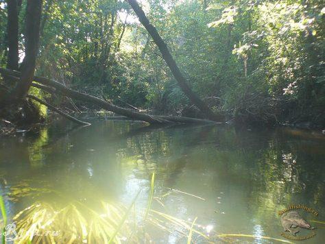 Деревья в воде