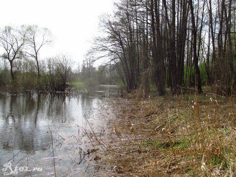 Прошлогодний тросник на берегу речки