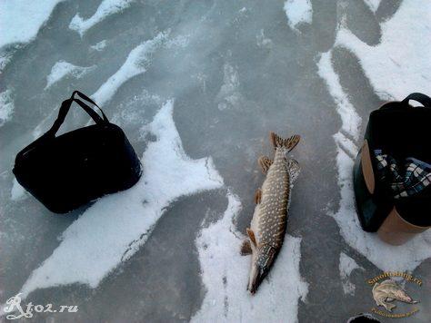 Щука на флажок на озере