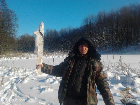 Замороженная щука 1