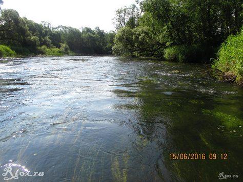 заросший перекат на речке