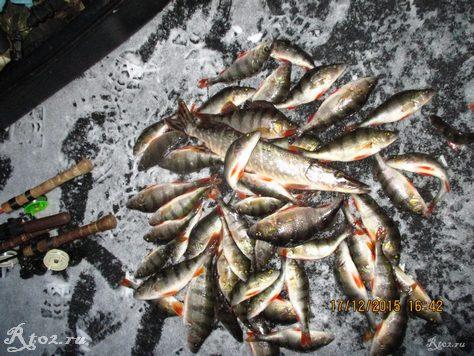 улов рыбы по первому льду на десне 43