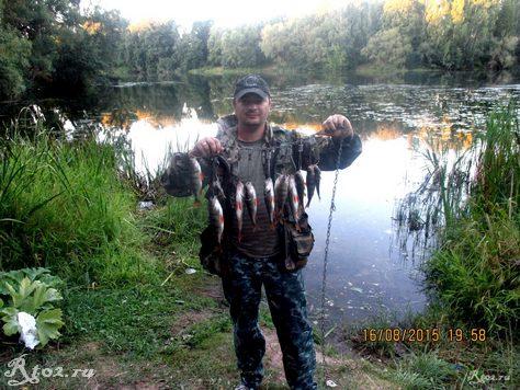 мой улов окуней на озере спиннингом 3556
