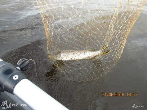 щука на озере 35