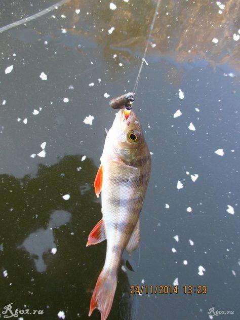 окунь на озере на балду 34