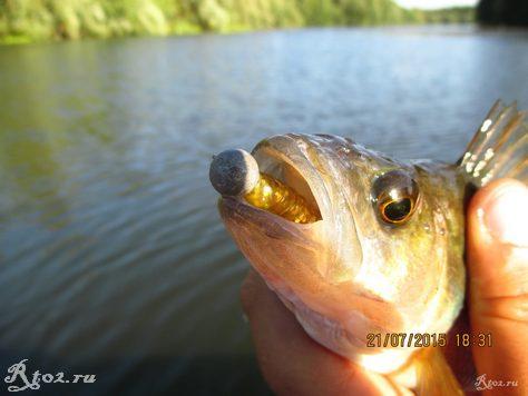 окунь на озере на силикон 3ФГ 3