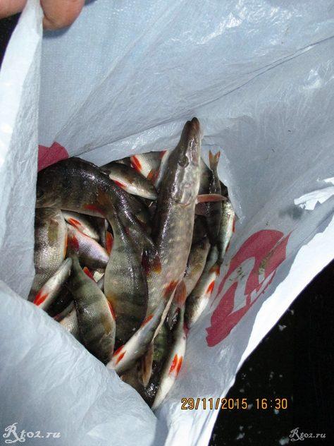 улов рыбы на первом льду в шмаково