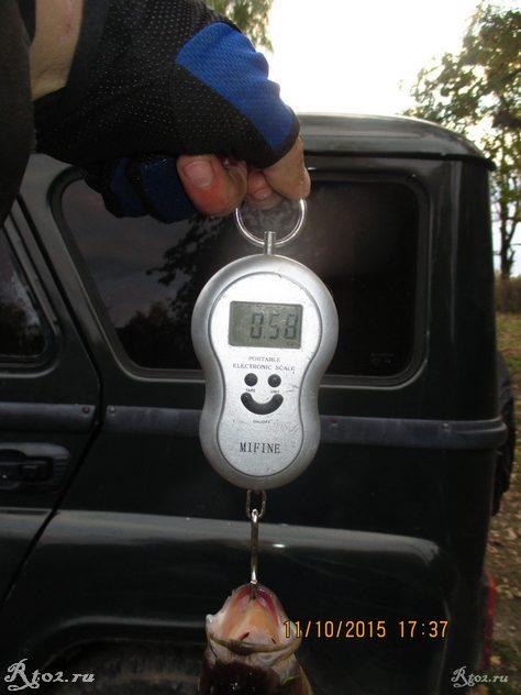 вес окуня на 580 г