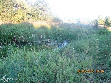 заросшая река 45