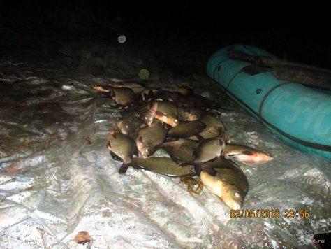 подсчет рыбывыловленной сетями 3
