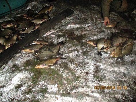 подсчет рыбывыловленной сетями 5
