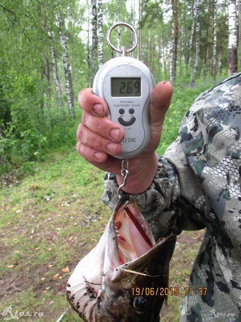 вес щуки 235