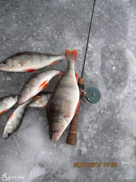 окуни на озере 35
