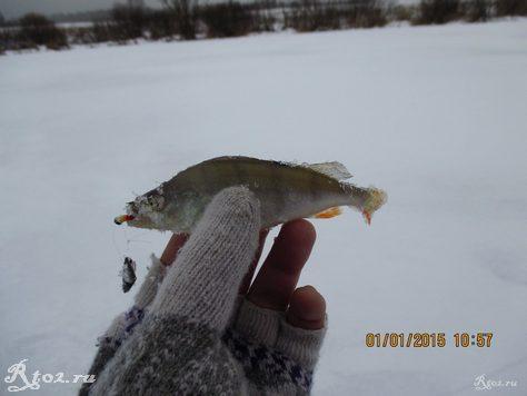 окунь на балду зимой на озере 112