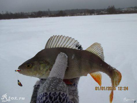 окунь на балду зимой на озере 114