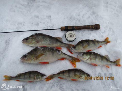 несколько окуней на балду на озере 346