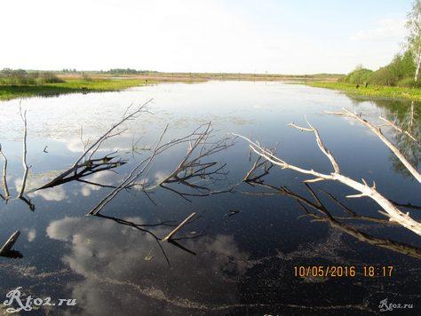 коряжник на озере в радышково