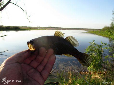 ротан на мормышку на озере в Радышково 6