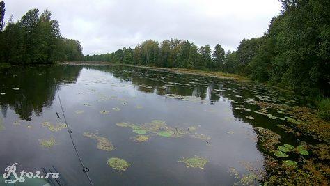 заросшее озеро 324
