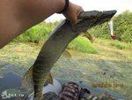 Ловля щуки сплавом на реке в сентябре