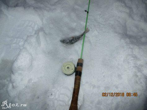 окунь на снегу