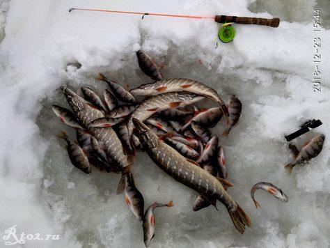 улов в декабре на реке