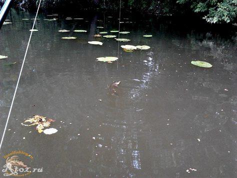 щука на воблер в воде