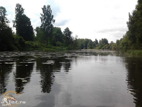 заросшее озеро 2