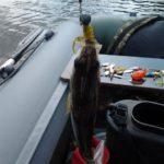 На окунька с твистерами на озеро