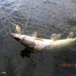 Десногорское водохранилище. Ловля щуки и окуня спиннингом на китайские приманки с Aliexpress
