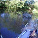 Ловля щуки и голавля спиннингом в июне на небольшой реке