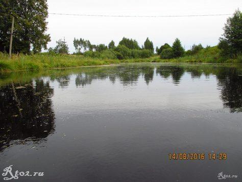 заболоченное озеро в глинкоском районе