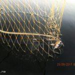 Ловля хищника спиннингом на Десногорском водохранилище в сентябре 2017. День второй