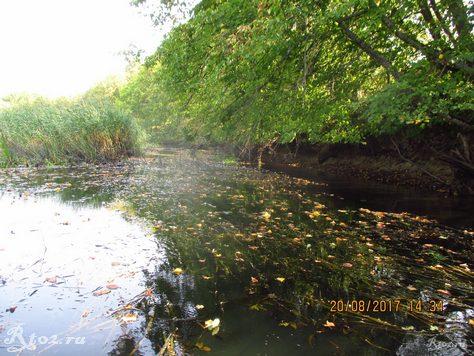 Заросшая река