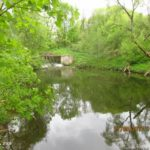 Прогулка с поплавочной удочкой по ручью