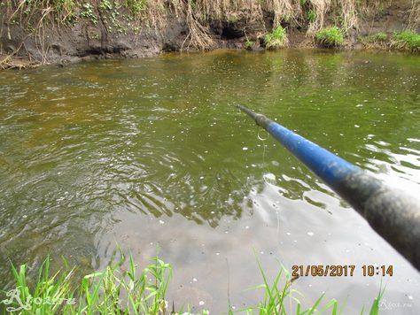 Торфянник на реке Лучесянка
