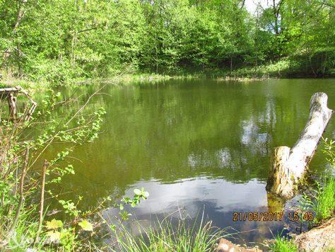 Заводь на озере